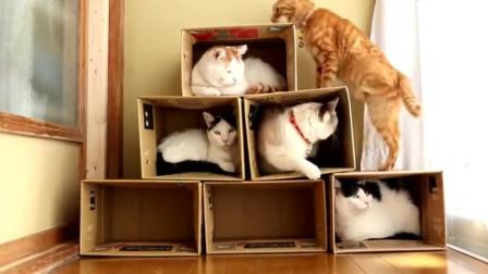 看7只猫咪蹲的位置, 就知道橘猫的地位不低!