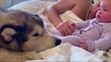 宝宝每天醒来就被父母围观,更有一群憨货眼巴巴底盯着,