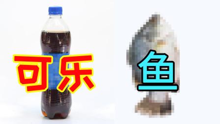 """喝可乐的""""危害""""?鱼放进可乐30天后的变化,喝口可乐压压惊"""