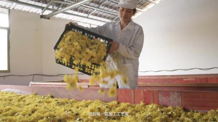 【颜值满分的神仙花茶!他走遍49个产区,带来每一口的高级感】