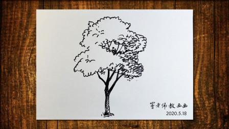 画树2窦老师教画画