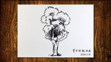 画树3窦老师教画画