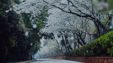 今年你们会去武汉大学看樱花么?