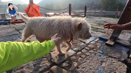 一个人行走在清晨的古镇,和一只狗子斗智斗勇,走走停停就是人生
