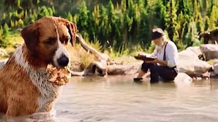 巴克河里捞到黄金,居然不稀罕,瞬间称霸狼群1