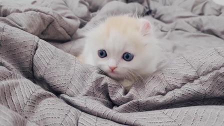 超级解压小奶猫,看着看着感觉心都要跟着一起融化了