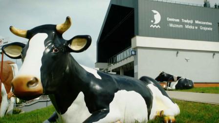 波兰格拉耶沃牛奶博物馆,这里有关于牛奶和奶牛的一切!