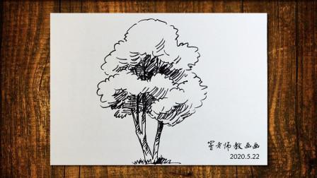 画树5窦老师教画画