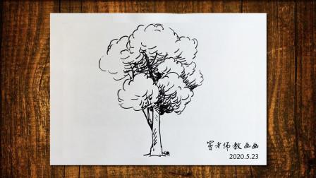 画树6窦老师教画画