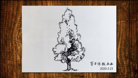 画树7窦老师教画画