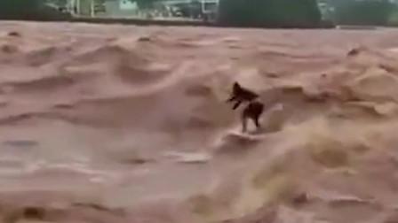 监控:在洪水里冲浪,你是活够啦?