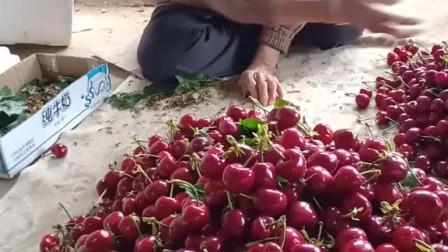 老奶奶80多岁了,种樱桃半辈子,果园还有2万多斤樱桃卖不出去,大家给个免费的红心帮帮她吧