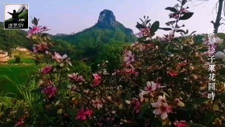 歌曲《花满天》表现出家乡满山捻子果花开的美景…