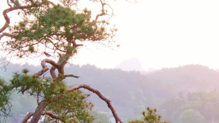 一只鸟的独白,站在树枝上所有的美景都是它的,落日余晖尽收眼底