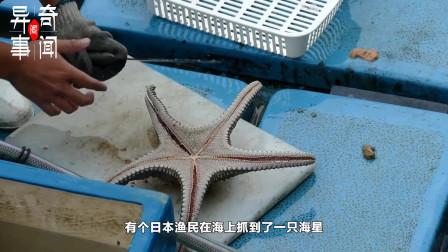 海星怎么吃?见到老师傅切开海星的瞬间,网友:妈,晚上不用做我的饭了