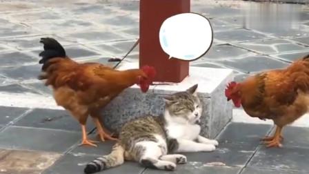 猫:你让我瞎,我让你进肯德基,你信不。