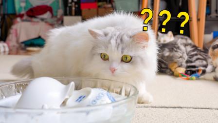 猫咪到底有多爱看热闹?我就洗个杯子,小猫咪在旁边看的一惊一乍