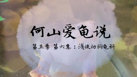 【何山爱龟说】第五季 第6集:浅谈动胸龟科