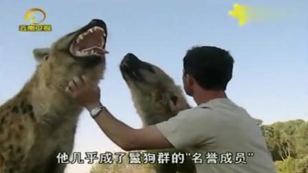 大自然:鬣狗的另一面,撇去它凶残的形象,同人类如好友般亲密