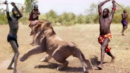 """狮子被""""马赛人""""杀到求饶?镜头记录全过程,看完吓得人腿发软!"""