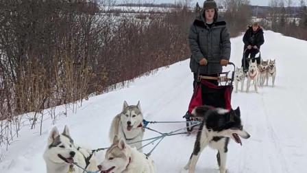美国女子担心农村老人外出染病每天用狗拉雪橇跑120公里送食品