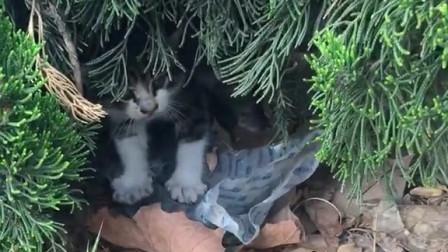 现在怎么遍地都是捡猫的呢?我的猫咪什么时候能捡到!