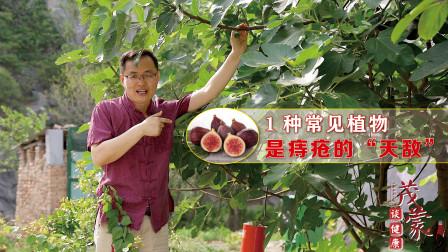 """农村常见1种植物,是痔疮的""""天敌"""",常用远离痔疮、脱肛"""
