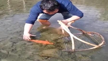 广西大哥发现一条红鲤鱼,差点就让它跑了,这么有趣我都想抓!