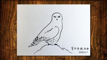 猫头鹰窦老师教画画