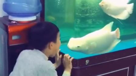 广东小伙家里,养了一条会吵架的鱼,真是太可爱了!