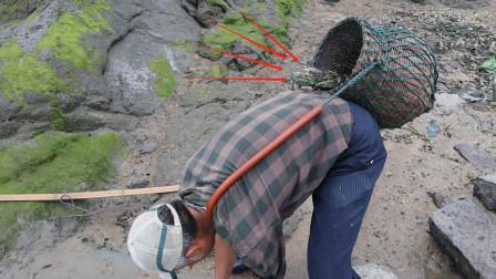 泰叔今年赶海抓螃蟹最多一次,螃蟹遍地留下脚印,个个又肥又大