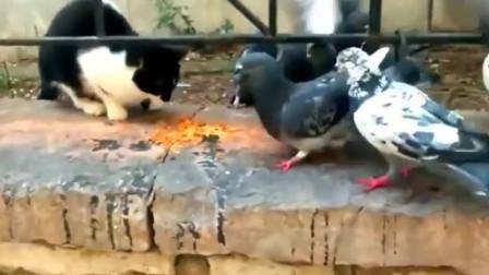 这猫也太怂了,还被鸟欺负