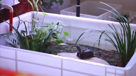学生党在家养龟是什么配置,豪华龟缸讲解