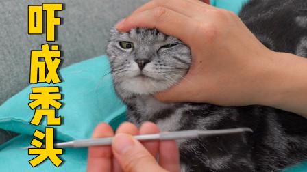 猫咪口臭一张嘴熏倒人!主人客串牙医帮忙洗牙,人和猫都害怕极了