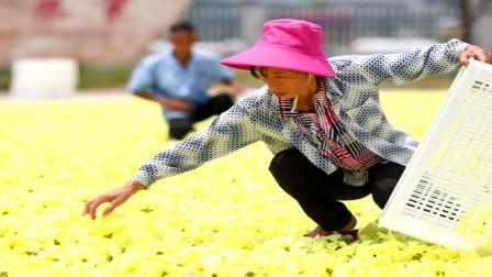 江西:特色种植助推农业发展 中药材产业成可持续富民产业
