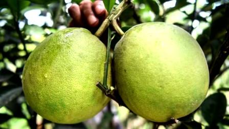广西钦州:带动贫困户种植特色中草药 助推当地群众脱贫增收