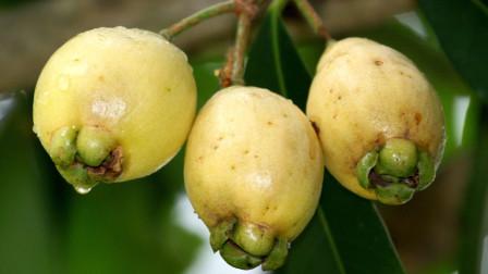 广东朋友知道这是什么水果吗?外表长的挺高端,里面的样子却有点恶心