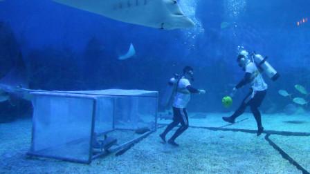 """潜水员海底发现飞机碎片,靠近一看吓到了,里面还有""""人""""?"""