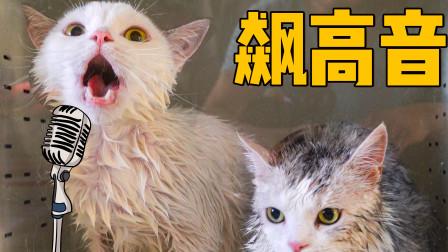 猫咪兄弟俩洗澡开起了演唱会,全程飙高音,洗完我耳朵都聋了