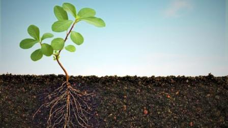 家庭种菜,调配营养土用这几个方法,简单实用又省钱!