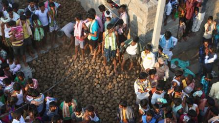 牛的地位在印度有多高,躺在地上被牛踩,竟然是种祝福!