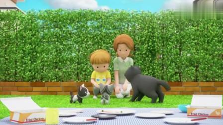 甜甜私房猫小猫咪真幸福,有着爱他的家人,这也是命运啊