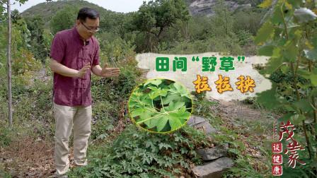 农村地里的一种野草,拉拉秧的3种妙用,很少有人能知道