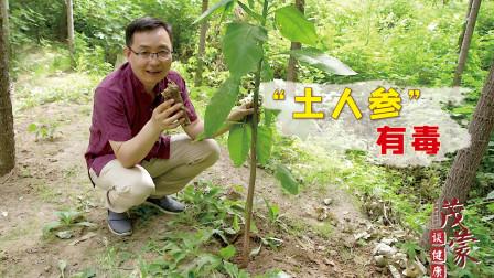 """医生:农村这种被称为""""土人参""""的植物,不要再拿来炖鸡了,有毒"""