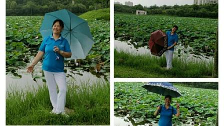 惠州江北念佛拍手操队:20200613惠州北湖公园赏荷花掠影。