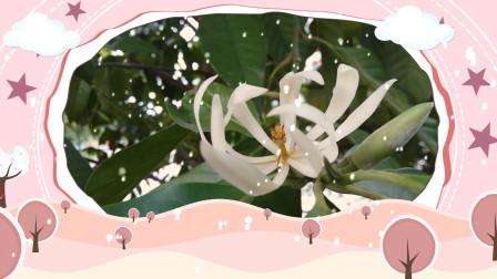 音乐视频04-自然美景-白玉兰 纯音乐 dj歌曲 网络红歌 田园风景 风景优美的乡村美景
