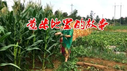 苞米地的故事