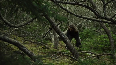 【全职野人】荒野的木工铁匠露营,维京后裔。-07. 丛林之旅[第1部分]