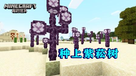 我的世界223:开心农场又添新植物,种上紫菘花,长出紫菘树!