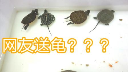 养龟播主居然收到了网友送的龟,这几只可不便宜呀!